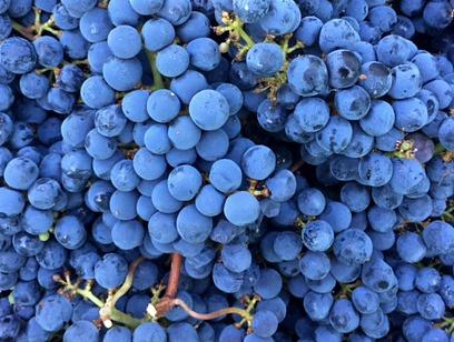 deo-cbs-grapes